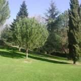 Z. verdes II