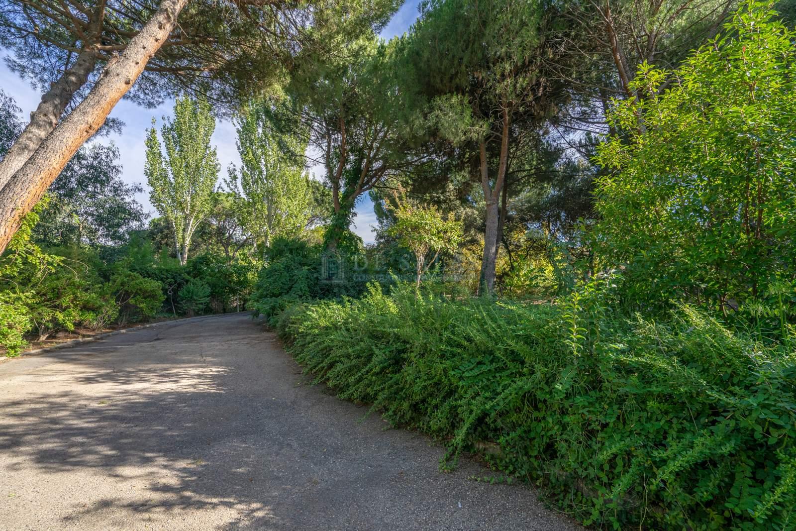 Jardín-39 Chalet La Moraleja